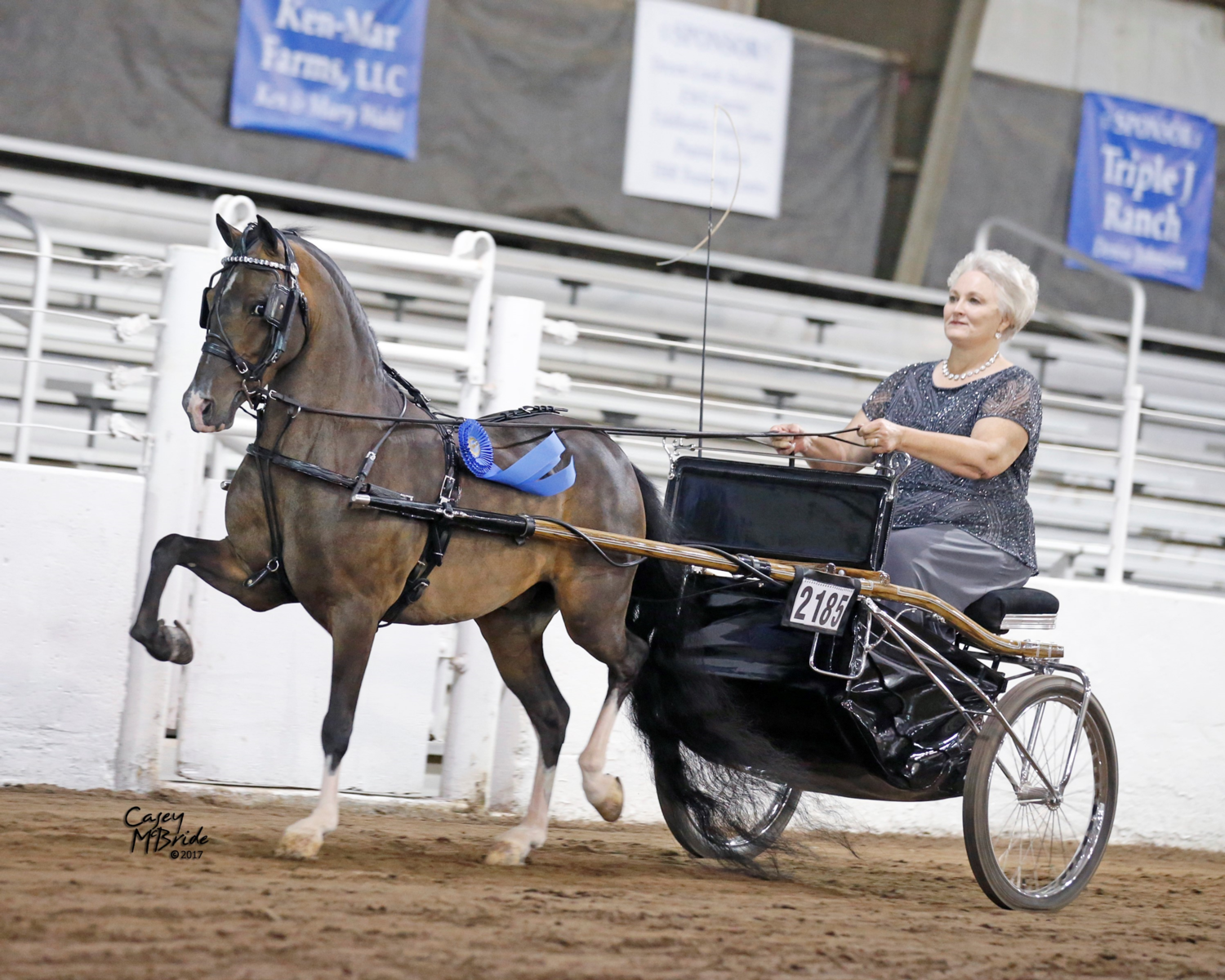 Tfs Equestrian Director S Horse Named Classic Driving